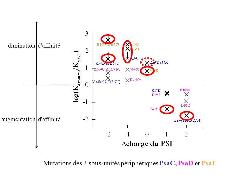 diminution d affinité augmentation d affinité Mutations des 3 sous-unités périphériques PsaC, PsaD et PsaE