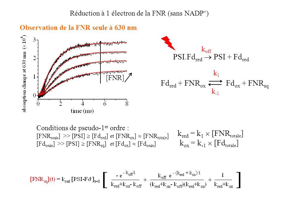 Réduction à 1 électron de la FNR (sans NADP + ) Observation de la FNR seule à 630 nm [FNR] PSI.Fd red PSI + Fd red k off Fd red + FNR ox Fd ox + FNR sq k1k1 k -1 k red = k 1 [FNR totale ] k ox = k -1 [Fd totale ] Conditions de pseudo-1 er ordre : [FNR totale ] >> [PSI] [Fd red ] et [FNR ox ] [FNR totale ] [Fd totale ] >> [PSI] [FNR sq ] et [Fd ox ] [Fd totale ]