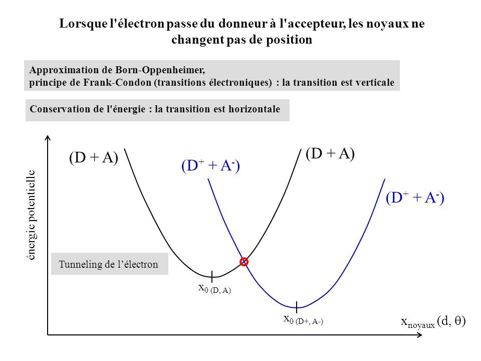 20 ps P700 + /P700 E m (V) (ref.: H + / H 2 at pH 0) P700 + /P700* -1.2 -0.8 -0.6 -0.4 -0.2 0.0 0.2 0.4 A 0, A 0 F X F A F B 1-3 ps 15 ns/200 ns h (700 nm) = 1.77 eV Fd P700 : dimère de chlorophylles a A 0, A 0 : chlorophylles a A 1, A 1 : phylloquinones F X, F A and F B : agrégats 4Fe-4S A 1, A 1 FXFX FBFB FAFA A1A1 A 1 A0A0 A 0 P700