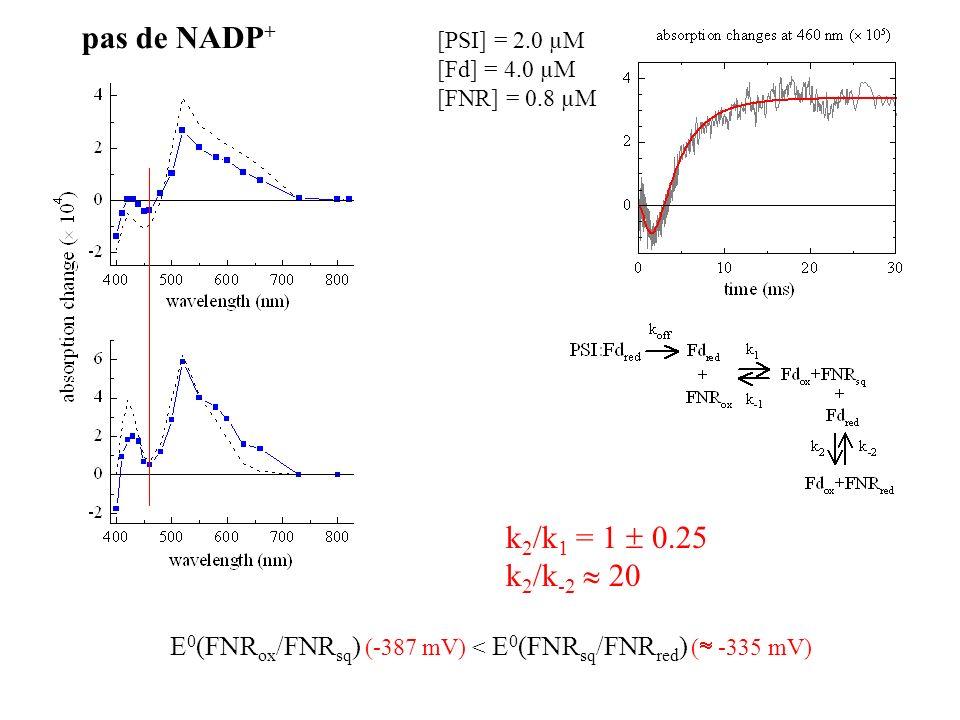 k 2 /k 1 = 1 0.25 k 2 /k -2 20 E 0 (FNR ox /FNR sq ) (-387 mV) < E 0 (FNR sq /FNR red ) ( -335 mV) [PSI] = 2.0 µM [Fd] = 4.0 µM [FNR] = 0.8 µM pas de NADP +