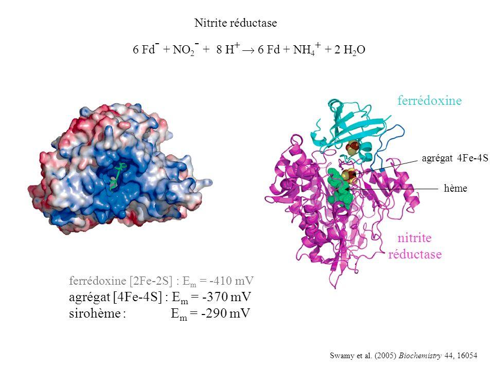 hème agrégat 4Fe-4S ferrédoxine nitrite réductase Nitrite réductase 6 Fd - + NO 2 - + 8 H + 6 Fd + NH 4 + + 2 H 2 O Swamy et al.