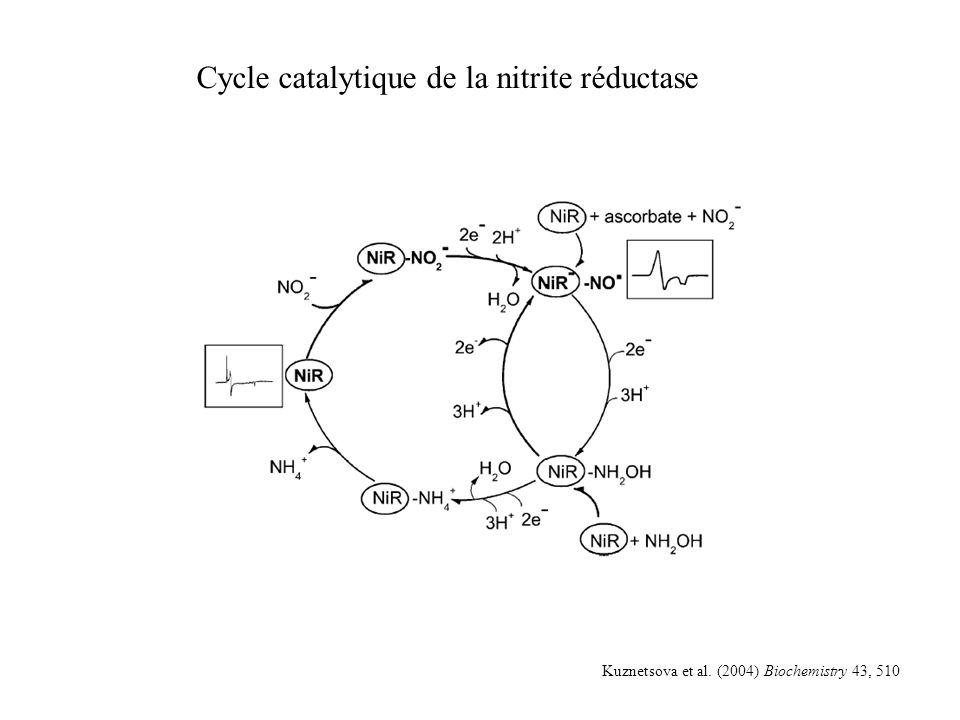 Cycle catalytique de la nitrite réductase Kuznetsova et al. (2004) Biochemistry 43, 510