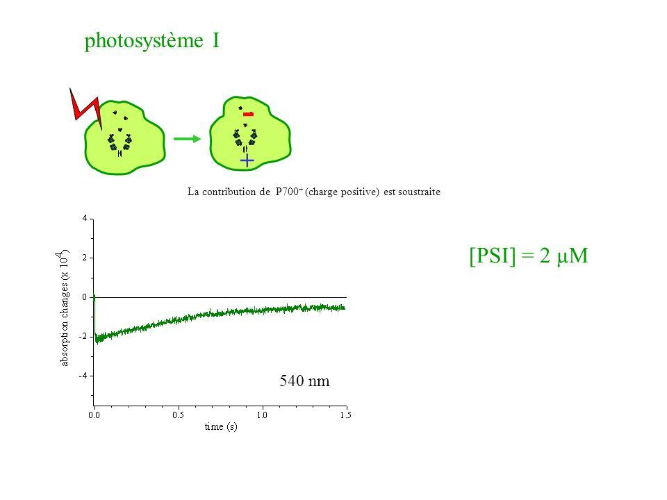 + - [PSI] = 2 µM photosystème I 540 nm La contribution de P700 + (charge positive) est soustraite