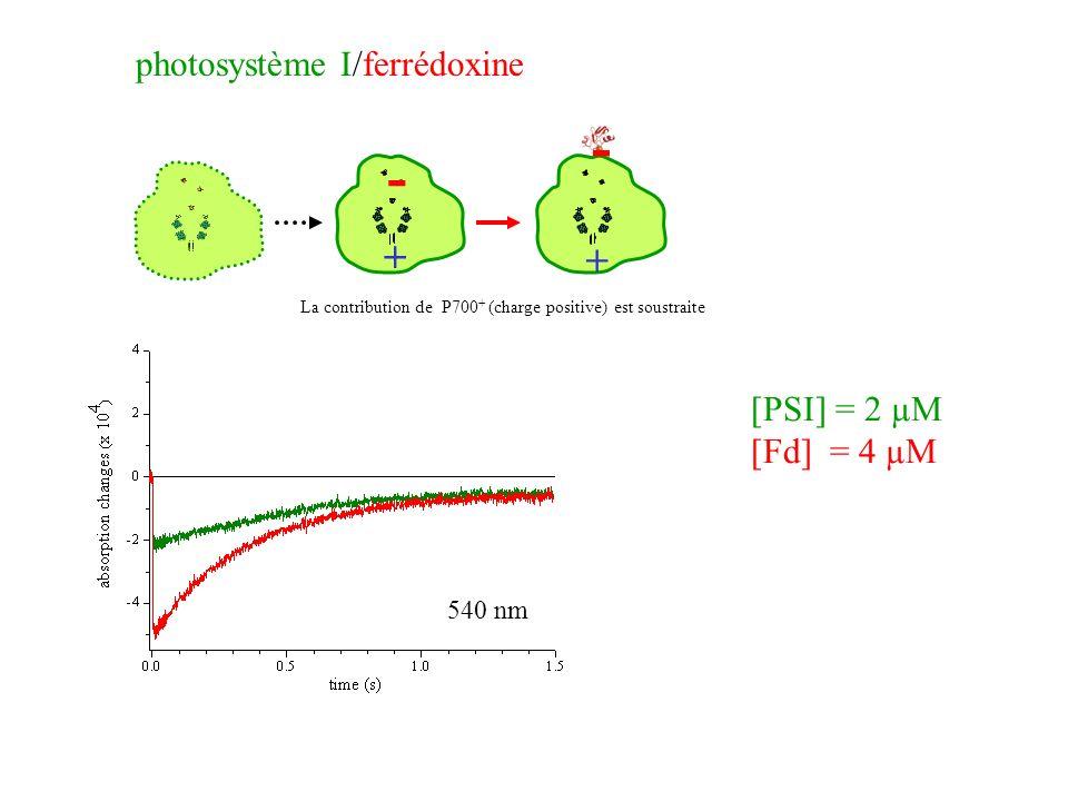+ - + - [PSI] = 2 µM [Fd] = 4 µM photosystème I/ferrédoxine 540 nm La contribution de P700 + (charge positive) est soustraite