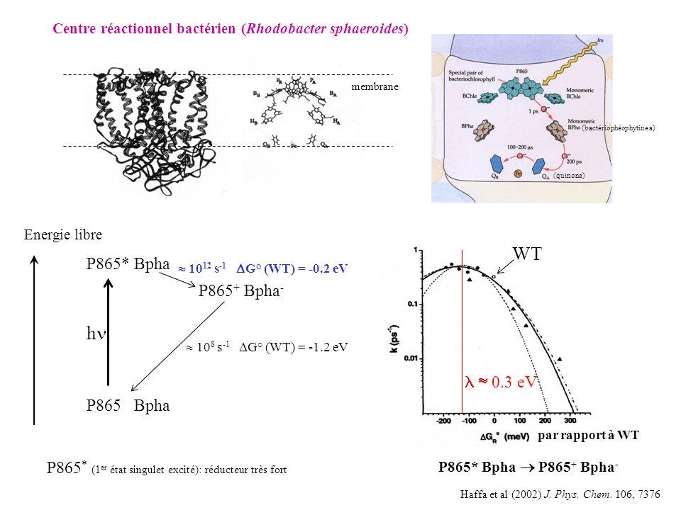 par rapport à WT WT P865* Bpha P865 + Bpha - Haffa et al (2002) J.
