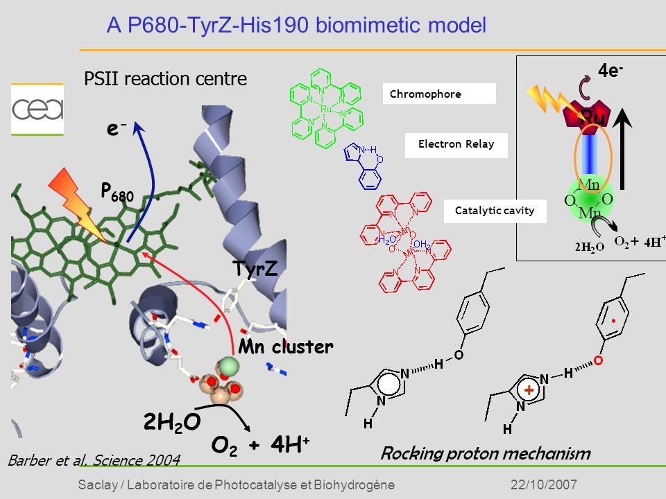 Saclay / Laboratoire de Photocatalyse et Biohydrogène22/10/2007 A P680-TyrZ-His190 biomimetic model PSII reaction centre P 680 TyrZ Mn cluster e-e- 2H