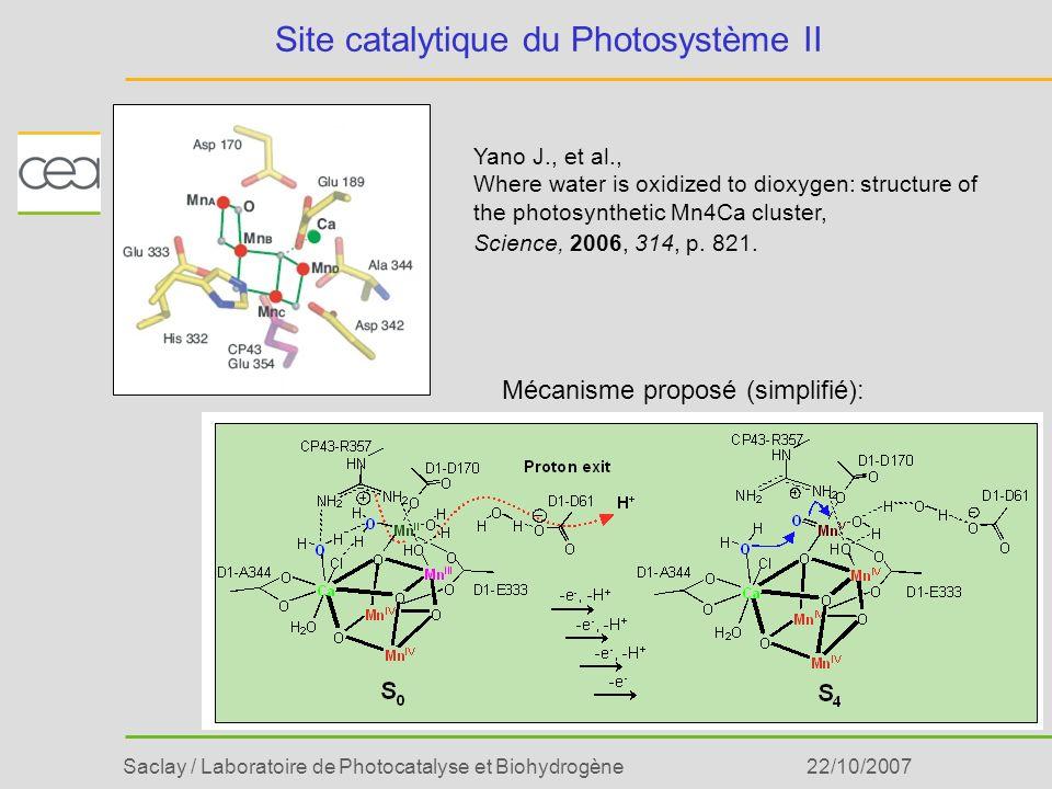 Saclay / Laboratoire de Photocatalyse et Biohydrogène22/10/2007 Site catalytique du Photosystème II Yano J., et al., Where water is oxidized to dioxyg