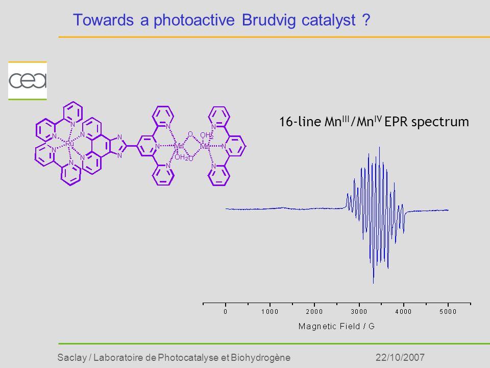 Saclay / Laboratoire de Photocatalyse et Biohydrogène22/10/2007 Towards a photoactive Brudvig catalyst ? 16-line Mn III /Mn IV EPR spectrum