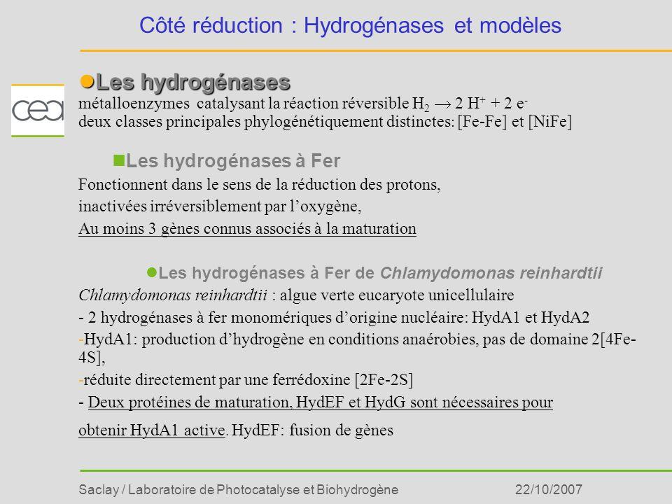 Saclay / Laboratoire de Photocatalyse et Biohydrogène22/10/2007 Côté réduction : Hydrogénases et modèles Les hydrogénases Les hydrogénases métalloenzy