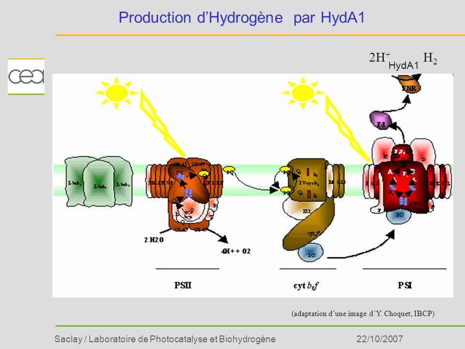 Saclay / Laboratoire de Photocatalyse et Biohydrogène22/10/2007 Production dHydrogène par HydA1 HydA1 2H + H2H2 (adaptation dune image dY. Choquet, IB