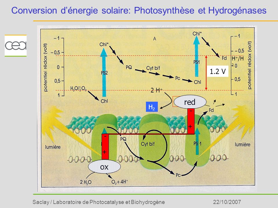 Saclay / Laboratoire de Photocatalyse et Biohydrogène22/10/2007 Conversion dénergie solaire: Photosynthèse et Hydrogénases H 2 ase H2H2 2 H + H + /H 2