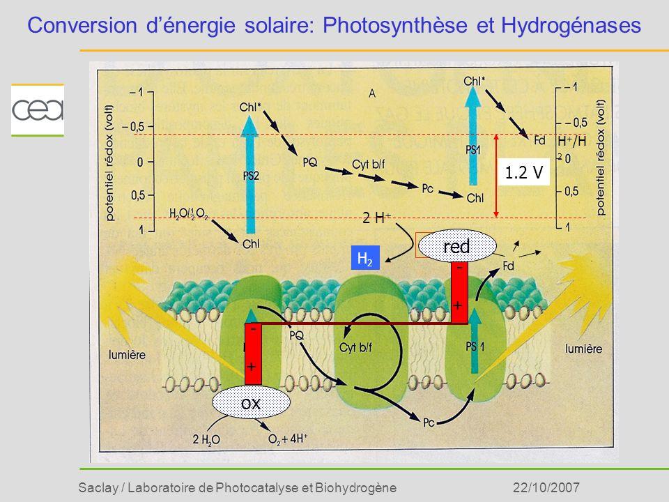 Saclay / Laboratoire de Photocatalyse et Biohydrogène22/10/2007 Modélisation du côté donneur du PS II Ru- p -phénol Ru-o-phénol Ru-Imidazole-benzène Imidazole Phénol Liaison dhydrogène Lachaud et al., Angew.