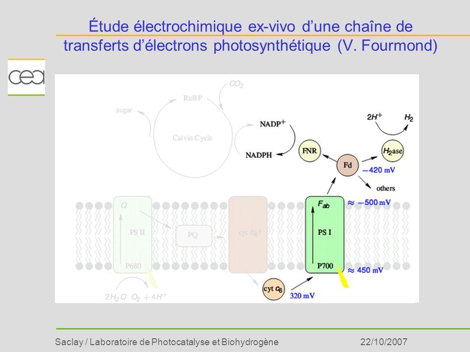 Saclay / Laboratoire de Photocatalyse et Biohydrogène22/10/2007 Étude électrochimique ex-vivo dune chaîne de transferts délectrons photosynthétique (V