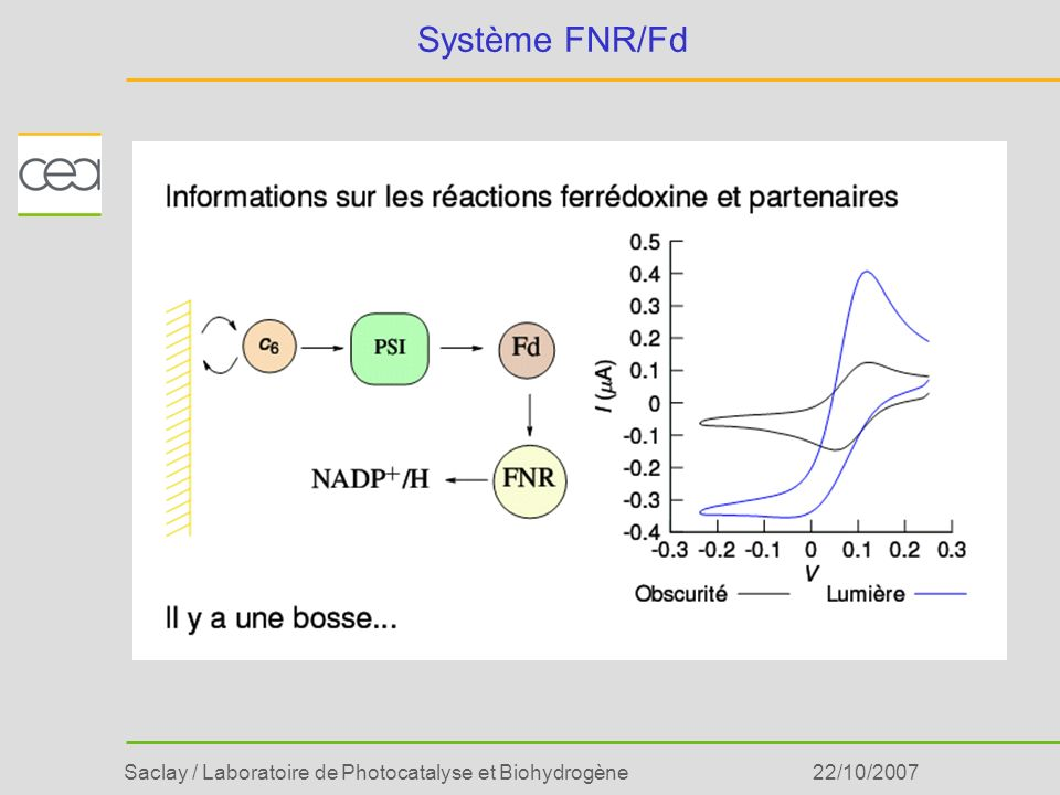 Saclay / Laboratoire de Photocatalyse et Biohydrogène22/10/2007 Système FNR/Fd