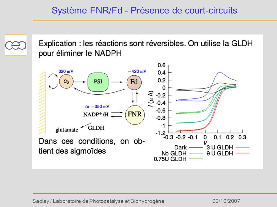 Saclay / Laboratoire de Photocatalyse et Biohydrogène22/10/2007 Système FNR/Fd - Présence de court-circuits