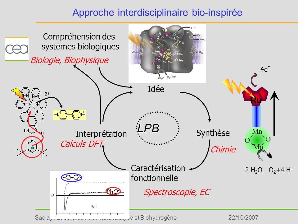 Saclay / Laboratoire de Photocatalyse et Biohydrogène22/10/2007 Catalyseurs pour la photoproduction dH 2 : Principe H2H2 O 2 +4 H + 2 H 2 O 2 H + catalyseur Absorption de photons Séparation de charges Source dénergie + - photosynthèsehydrogénase Donneur délectron Accepteur délectron
