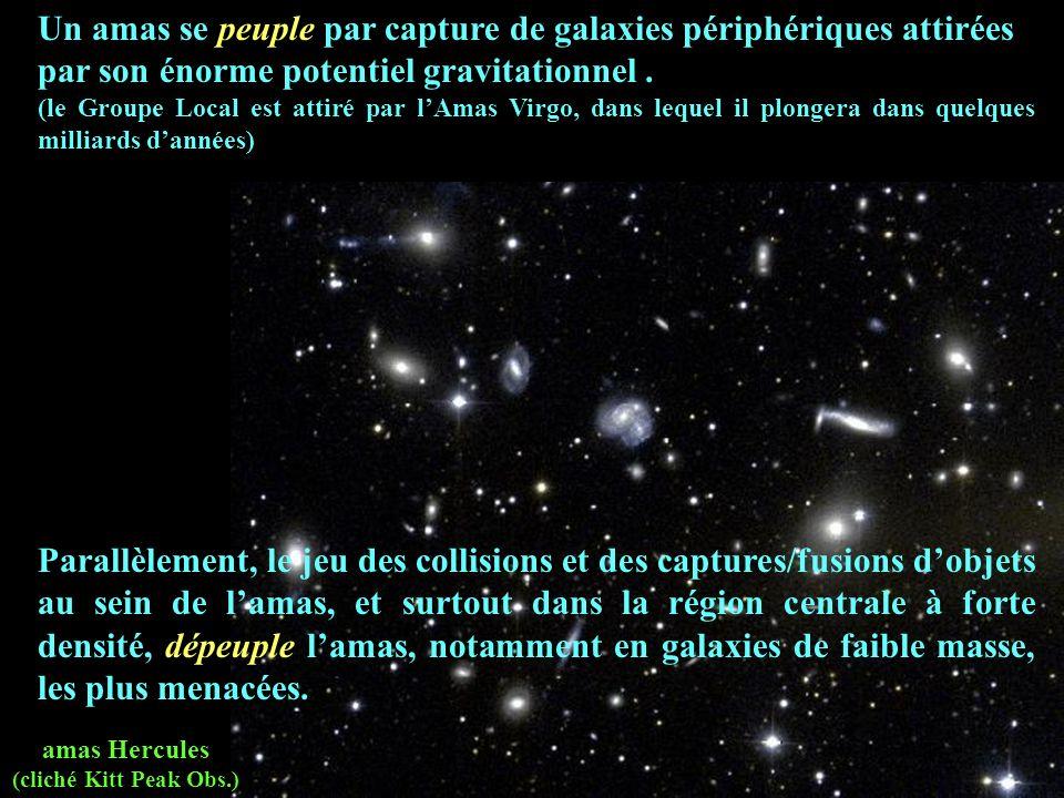amas Hercules (cliché Kitt Peak Obs.) Un amas se peuple par capture de galaxies périphériques attirées par son énorme potentiel gravitationnel. (le Gr
