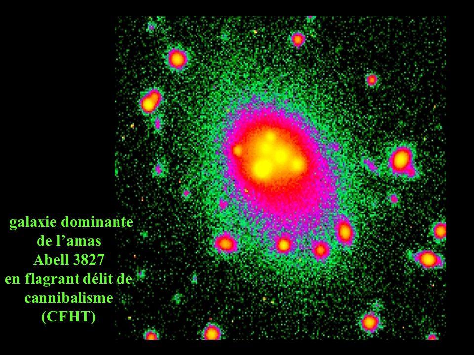 galaxie dominante de lamas Abell 3827 en flagrant délit de cannibalisme (CFHT)