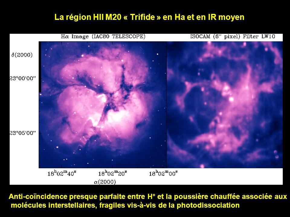 La région HII M20 « Trifide » en Ha et en IR moyen Anti-coïncidence presque parfaite entre H + et la poussière chauffée associée aux molécules interst