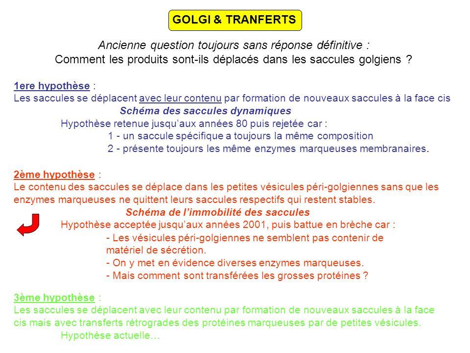 GOLGI & TRANFERTS Ancienne question toujours sans réponse définitive : Comment les produits sont-ils déplacés dans les saccules golgiens .