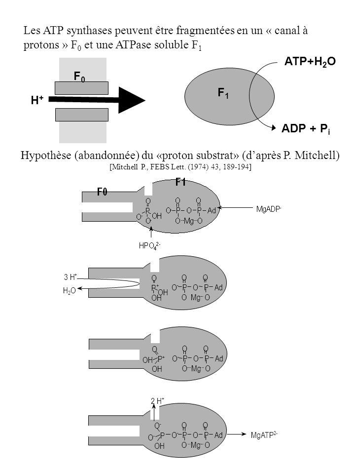 Hypothèse (abandonnée) du «proton substrat» (daprès P. Mitchell) [Mitchell P., FEBS Lett. (1974) 43, 189-194] O O O - P O P Ad O Mg O O P + OH 3 H + H