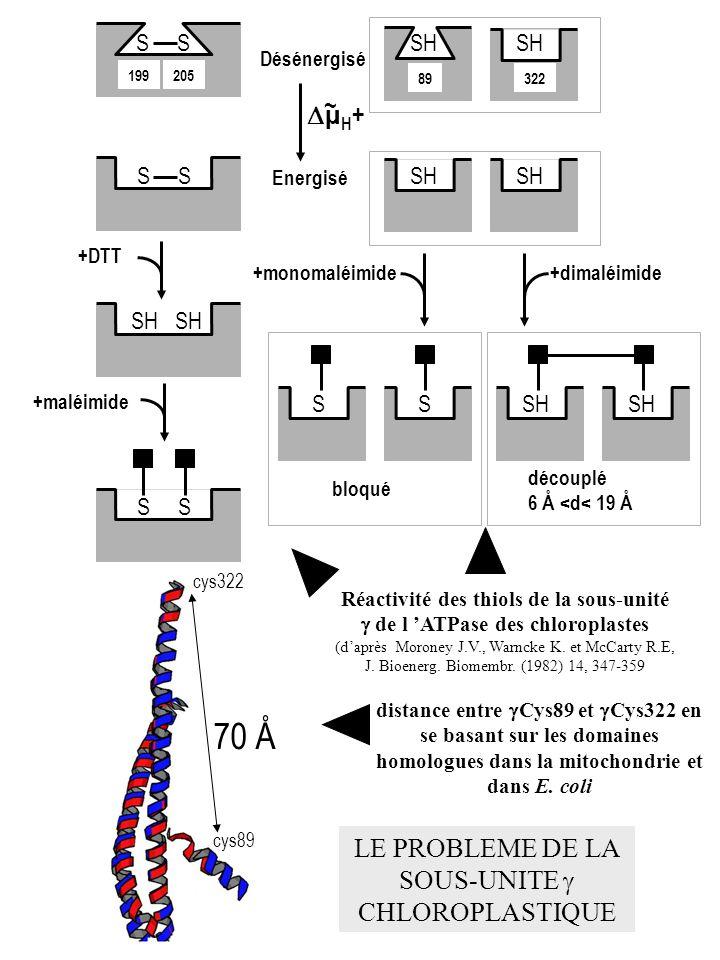 Désénergisé Energisé µ H + ~ S 199205 S SH S +DTT +maléimide SH 89 SH 322 SH +monomaléimide+dimaléimide SSSH bloqué découplé 6 Å <d< 19 Å Réactivité d