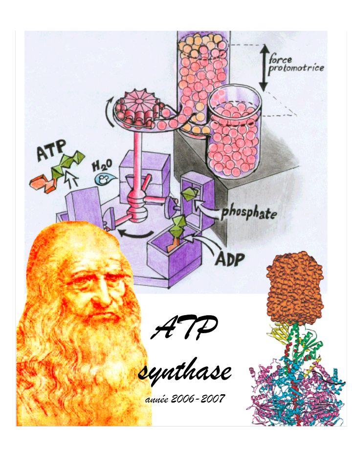 ATP synthase année 2006-2007