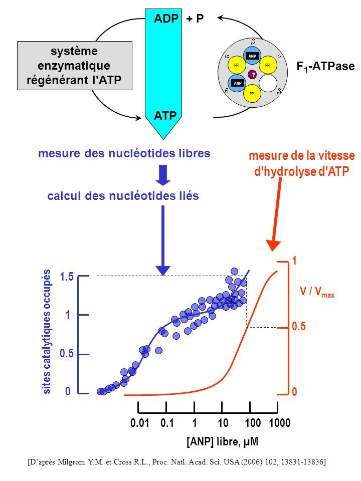PPi ANP PPi PPi ANP ATP ADP + P système enzymatique régénérant l'ATP F 1 -ATPase mesure des nucléotides libres mesure de la vitesse d'hydrolyse d'ATP