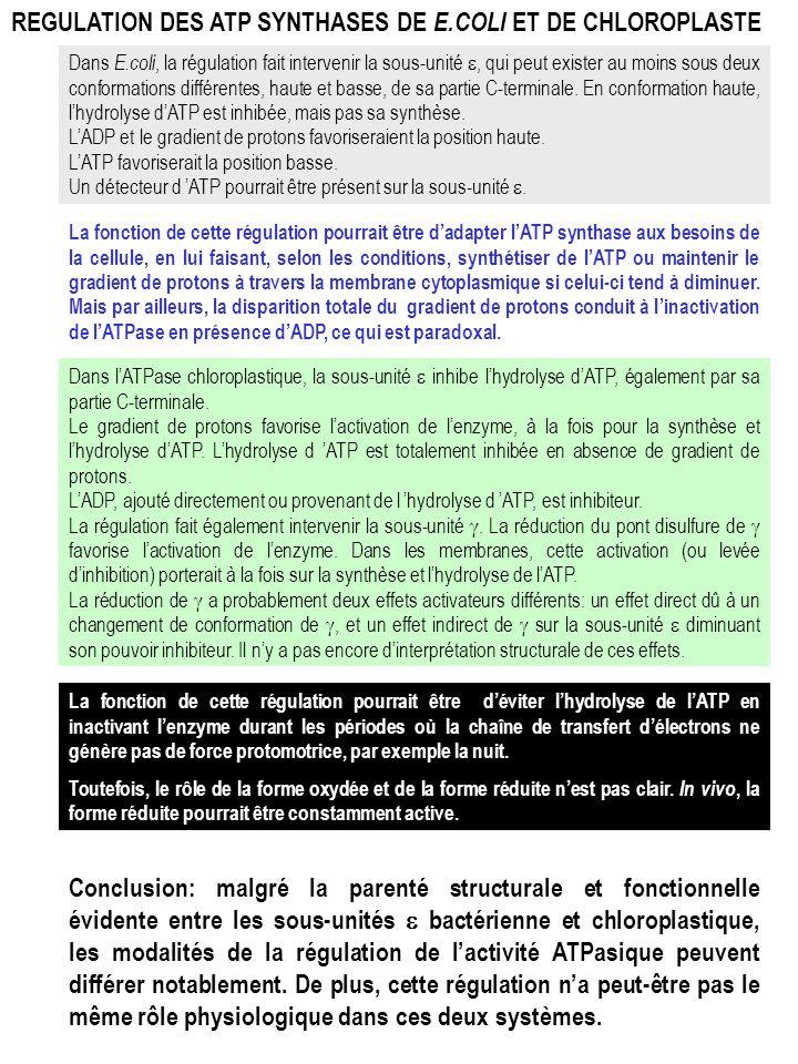 REGULATION DES ATP SYNTHASES DE E.COLI ET DE CHLOROPLASTE Dans E.coli, la régulation fait intervenir la sous-unité, qui peut exister au moins sous deu