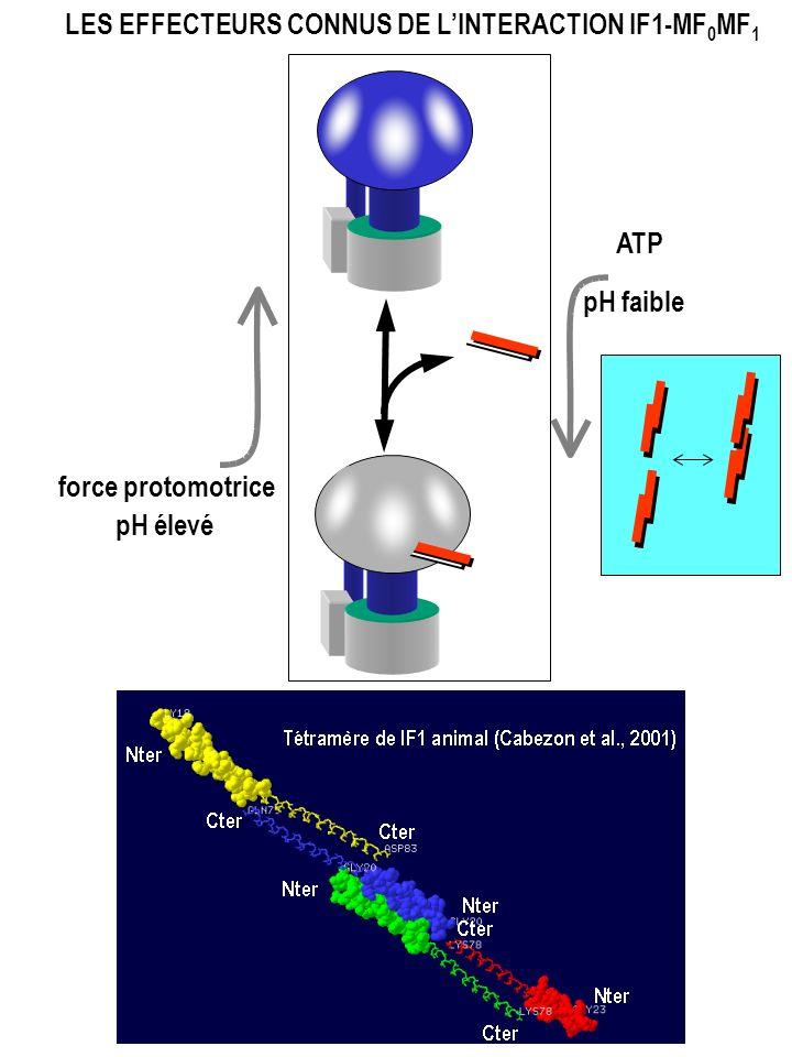 LES EFFECTEURS CONNUS DE LINTERACTION IF1-MF 0 MF 1 force protomotrice pH élevé ATP pH faible