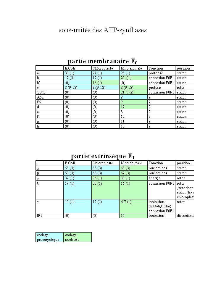 Localisation et fonction des ATP synthases Structure générale des ATP synthases et aperçu du mécanisme Les hypothèses fondatrices sur le mécanisme Lhypothèse du proton substrat Le mécanisme de changement daffinité Structure détaillée de la partie F 1 Les sites nucléotidiques Laxe central Structure de la partie F 0 Architecture du complexe F 0 F 1 Structure de la sous-unité c Structure de la sous-unité a Structure de la sous-unité b Mécanisme de la partie F 1 Evidence biochimique de la rotation Visualisation de la rotation Etats catalytiques, occupation des sites et étapes du mouvement rotatif Mécanisme de la partie F 0 Couplage entre F 0 et F 1 Stoechiométrie H + /ATP nombre de sous-unités c Elasticité et problèmes connexes Régulation de lactivité des ATP synthases Le cas des chloroplastes Le cas de E.coli Existe-t-il des cliquets moléculaires.