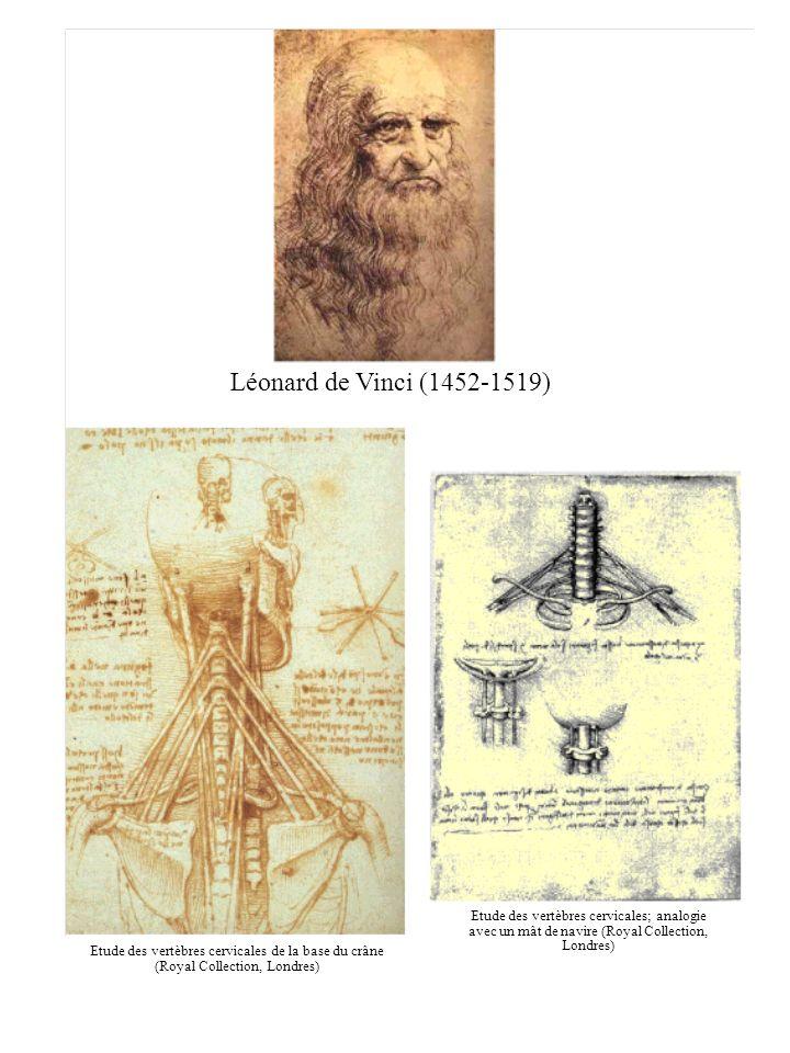 Léonard de Vinci (1452-1519) Etude des vertèbres cervicales de la base du crâne (Royal Collection, Londres) Etude des vertèbres cervicales; analogie a