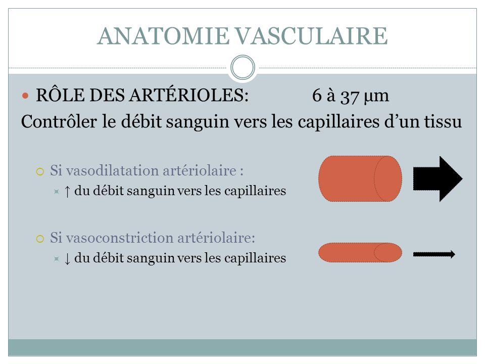 ANATOMIE VASCULAIRE RÔLE DES ARTÉRIOLES:6 à 37 µm Contrôler le débit sanguin vers les capillaires dun tissu Si vasodilatation artériolaire : du débit
