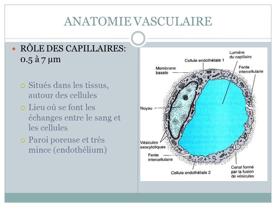 ANATOMIE VASCULAIRE RÔLE DES CAPILLAIRES: 0.5 à 7 µm Situés dans les tissus, autour des cellules Lieu où se font les échanges entre le sang et les cellules Paroi poreuse et très mince (endothélium)