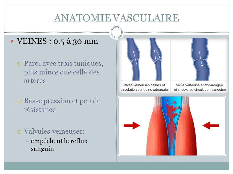 ANATOMIE VASCULAIRE VEINES : 0.5 à 30 mm Paroi avec trois tuniques, plus mince que celle des artères Basse pression et peu de résistance Valvules veineuses: empêchent le reflux sanguin