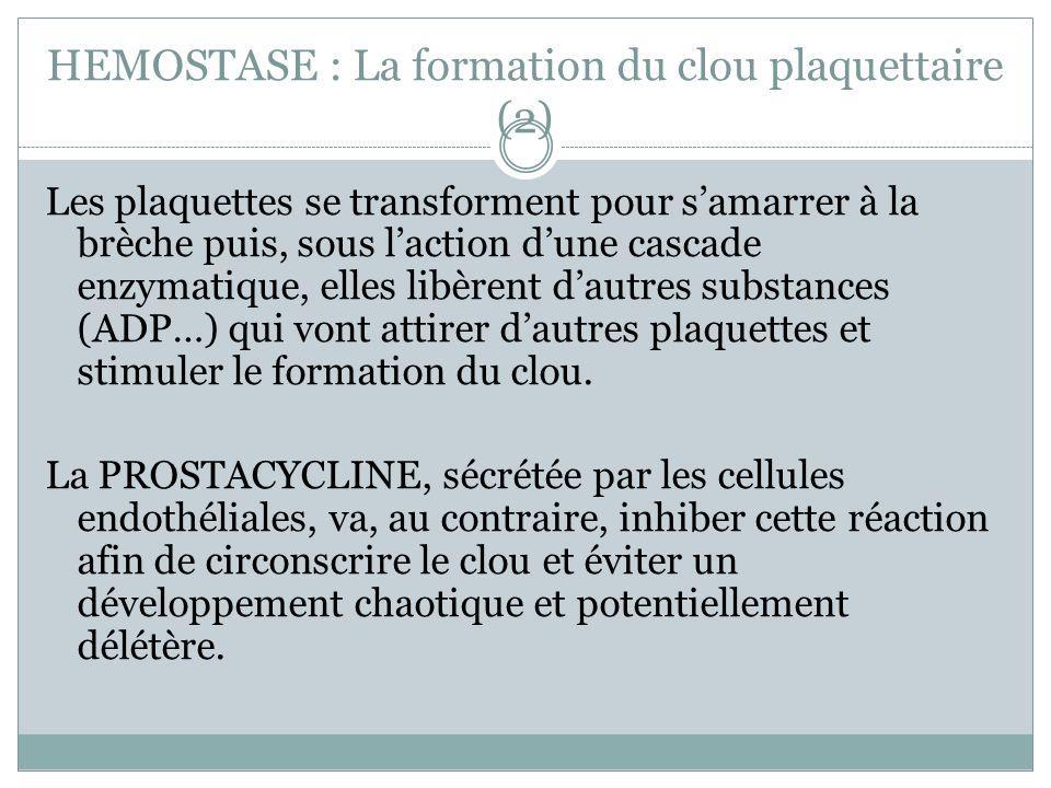HEMOSTASE : La formation du clou plaquettaire (2) Les plaquettes se transforment pour samarrer à la brèche puis, sous laction dune cascade enzymatique, elles libèrent dautres substances (ADP…) qui vont attirer dautres plaquettes et stimuler le formation du clou.