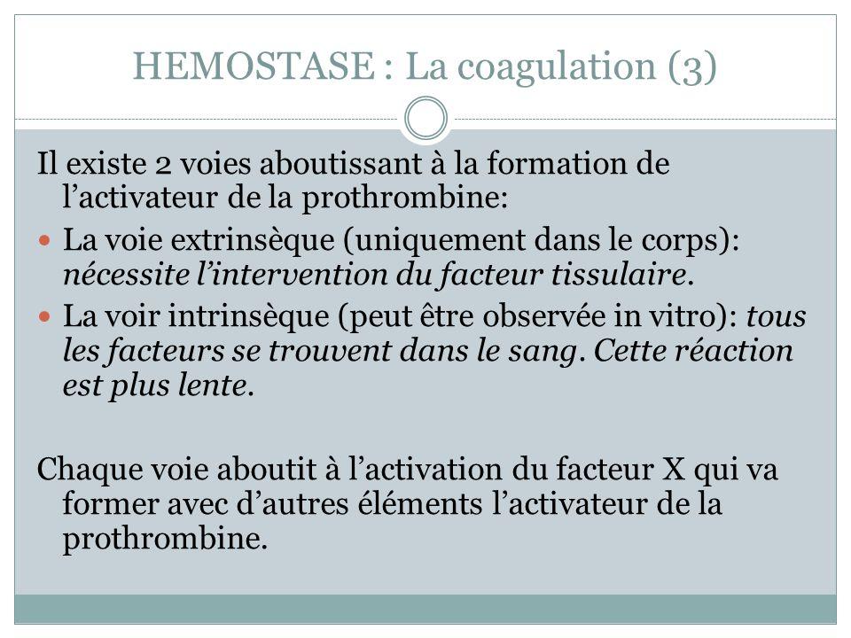 HEMOSTASE : La coagulation (3) Il existe 2 voies aboutissant à la formation de lactivateur de la prothrombine: La voie extrinsèque (uniquement dans le