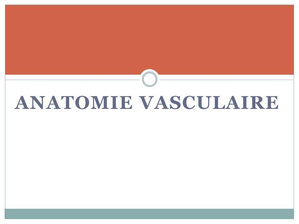 Lartérite oblitérante des membres inférieurs Sténose sur laxe artériel entre laorte et les artères du MI entraînant une symptomatologie de crampes avec troubles trophiques.