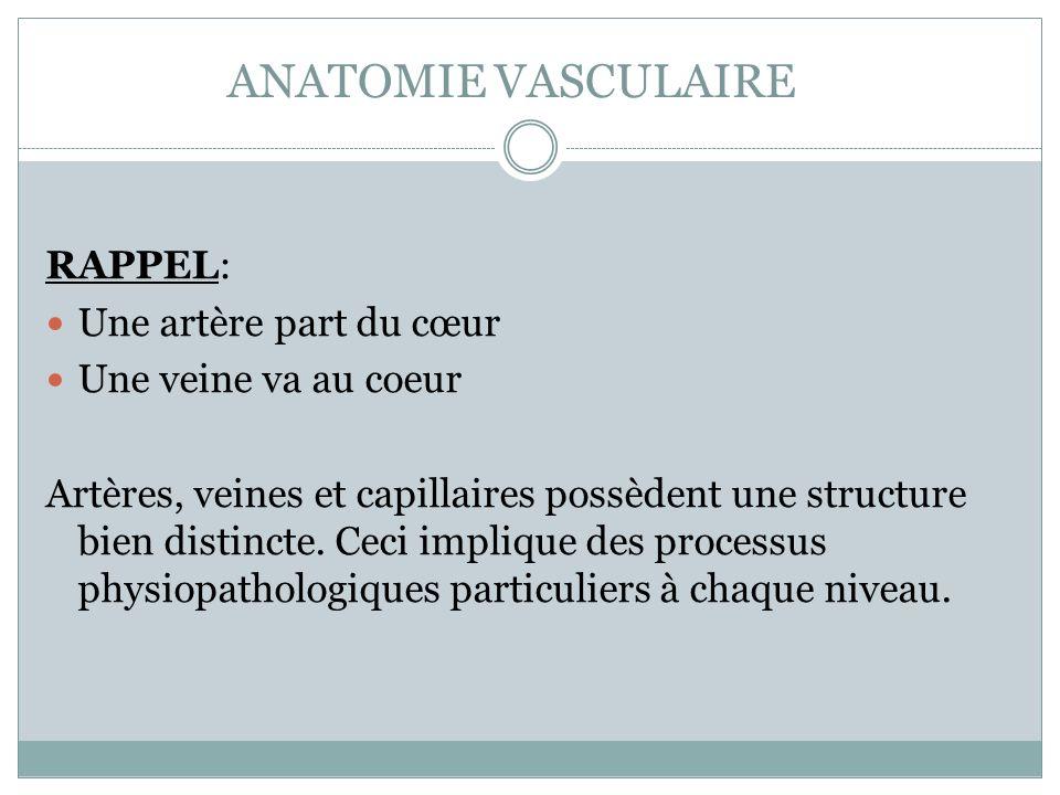ANATOMIE VASCULAIRE La paroi vasculaire est formée de 3 couches(tuniques): 1) TUNIQUE INTERNE (intima) formée dun endothélium (épithélium squameux simple) surface lisse 2) TUNIQUE MOYENNE (média) formée de: - cellules musculaires lisses - fibres élastiques permet: - la vasoconstriction ( diamètre du vaisseau) - la vasodilatation ( diamètre du vaisseau) 3) TUNIQUE EXTERNE (adventice ou externa) formée de tissu conjonctif peut contenir des vasa-vasorum (circulation nourricière des vaisseaux)