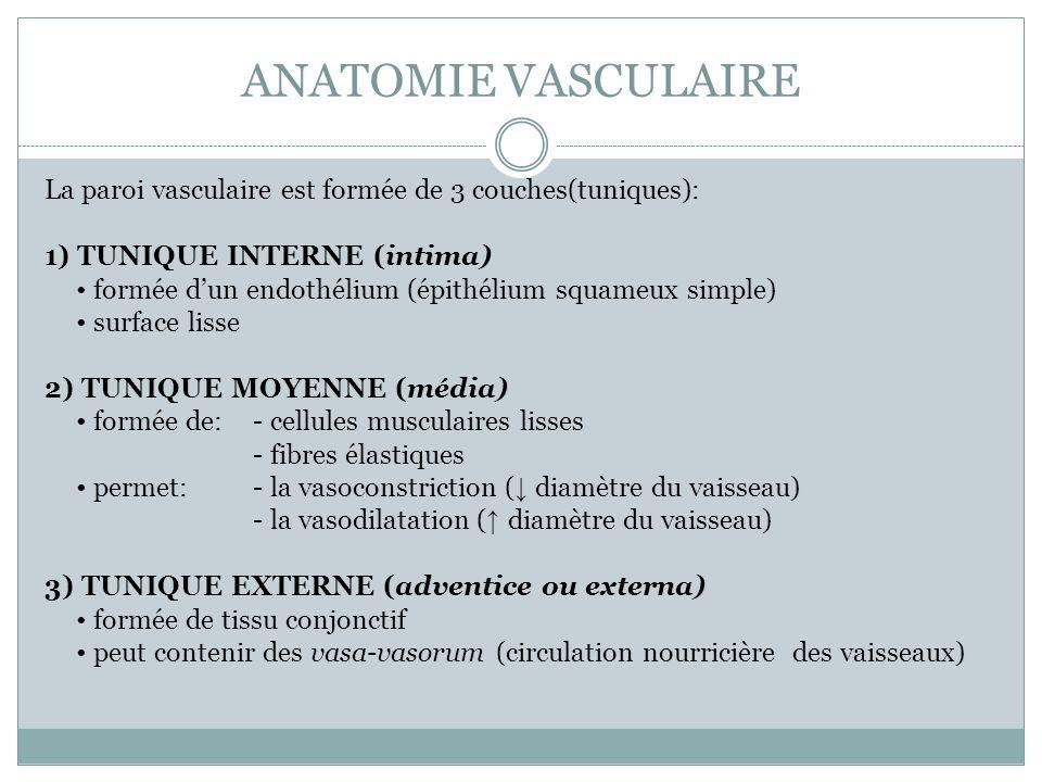 ANATOMIE VASCULAIRE La paroi vasculaire est formée de 3 couches(tuniques): 1) TUNIQUE INTERNE (intima) formée dun endothélium (épithélium squameux sim