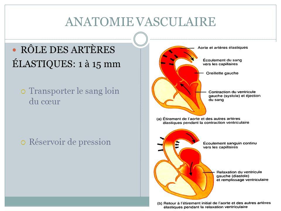 ANATOMIE VASCULAIRE RÔLE DES ARTÈRES ÉLASTIQUES: 1 à 15 mm Transporter le sang loin du cœur Réservoir de pression
