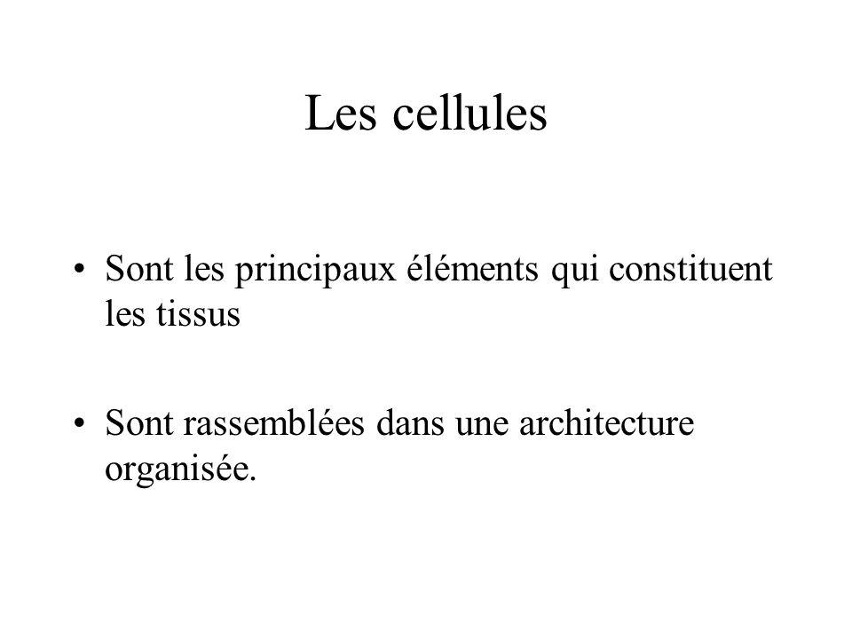 Les cellules Sont les principaux éléments qui constituent les tissus Sont rassemblées dans une architecture organisée.