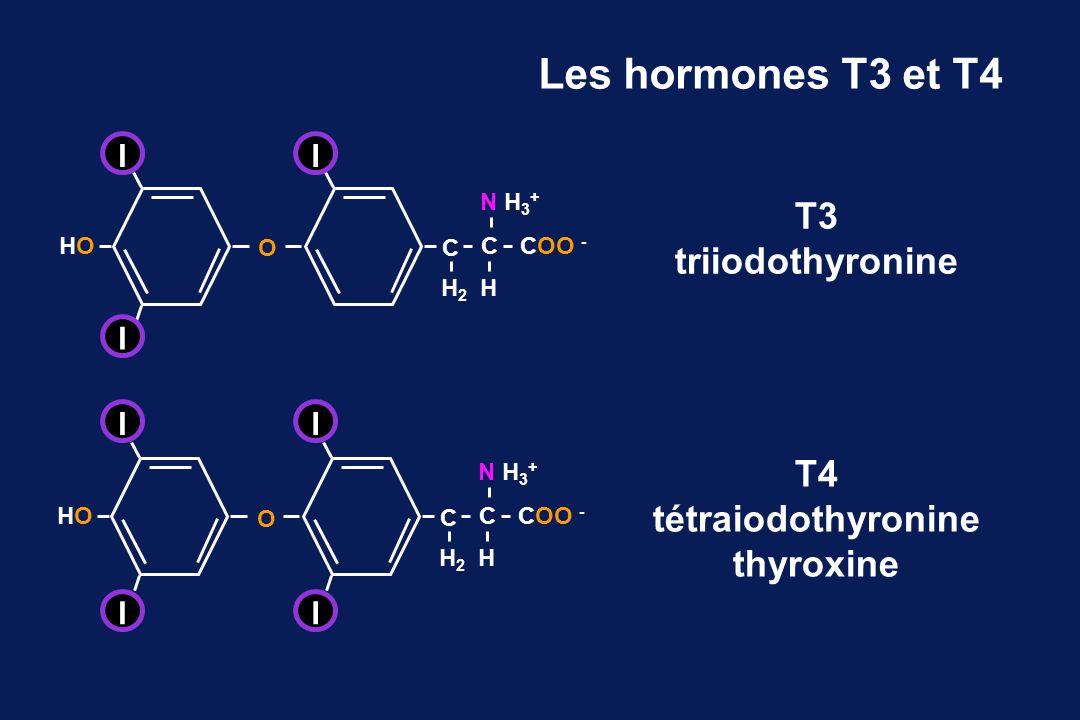 Les hormones T3 et T4 T3 triiodothyronine T4 tétraiodothyronine thyroxine C CCOO - HOHO O N H 3 + HH2H2 II I C CCOO - HOHO O N H 3 + HH2H2 I I I I