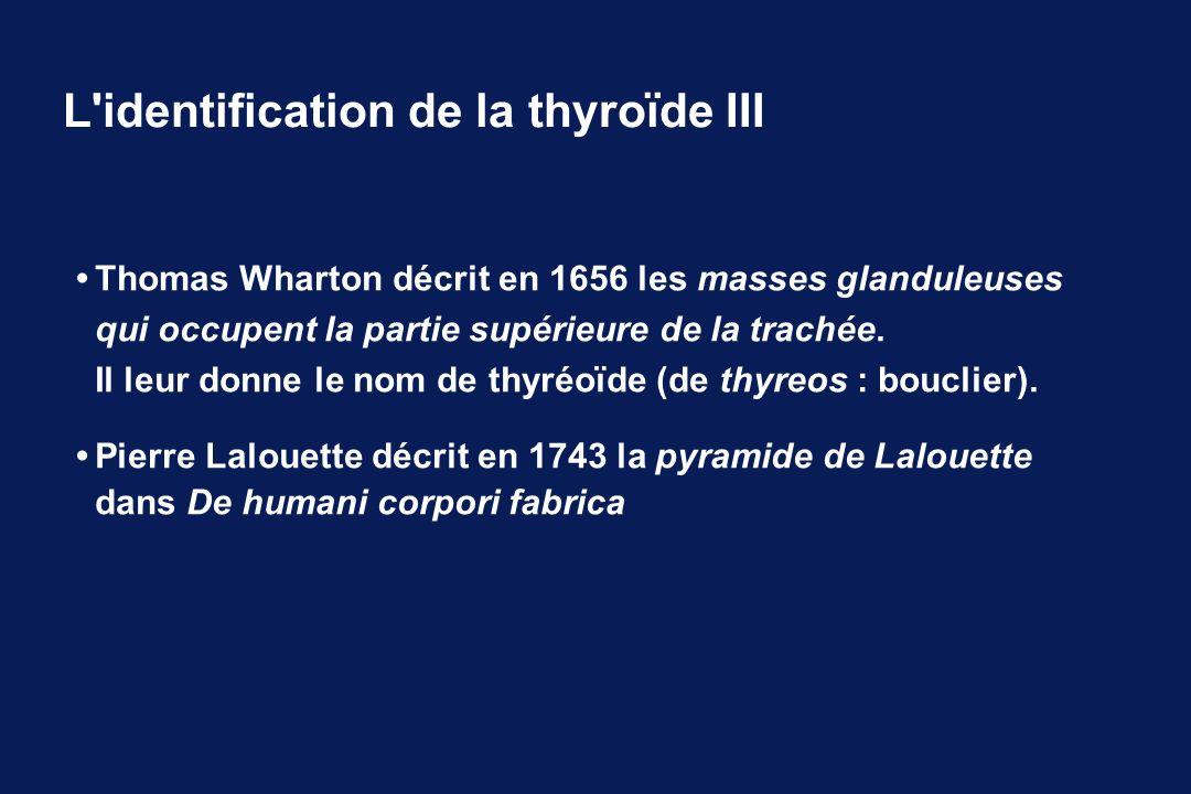 Thomas Wharton décrit en 1656 les masses glanduleuses qui occupent la partie supérieure de la trachée. Il leur donne le nom de thyréoïde (de thyreos :