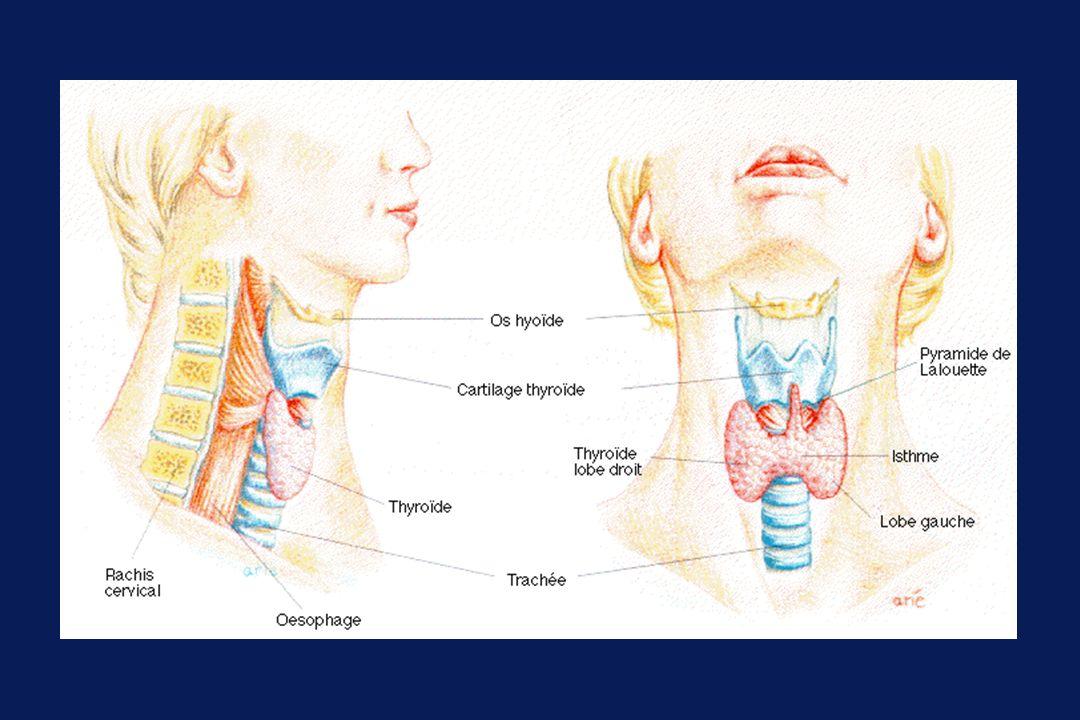 Embryologie thyroïdienne semaine 7 : la thyroïde apparaît semaine 10 : la thyroïde synthétise T3 et T4 semaine 12 : la thyroïde est régulée par la TSH