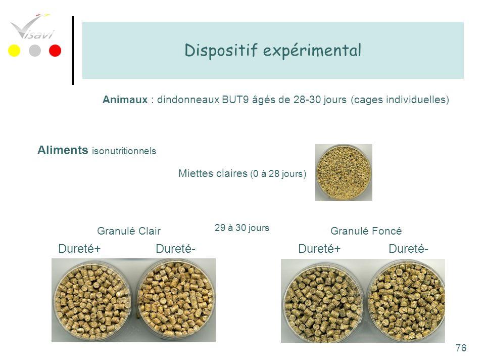 76 Dispositif expérimental Animaux : dindonneaux BUT9 âgés de 28-30 jours (cages individuelles) Aliments isonutritionnels Miettes claires (0 à 28 jour