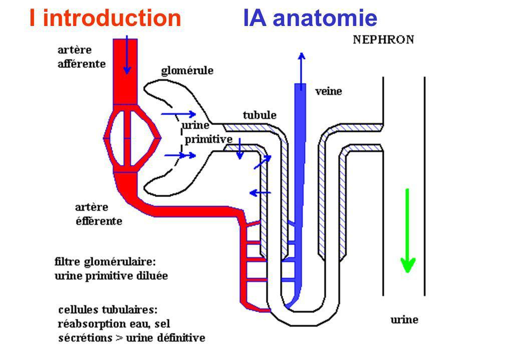 I introduction IA anatomie