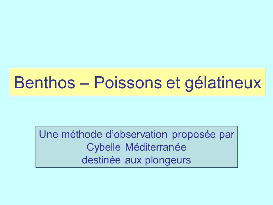 Benthos – Poissons et gélatineux Une méthode dobservation proposée par Cybelle Méditerranée destinée aux plongeurs