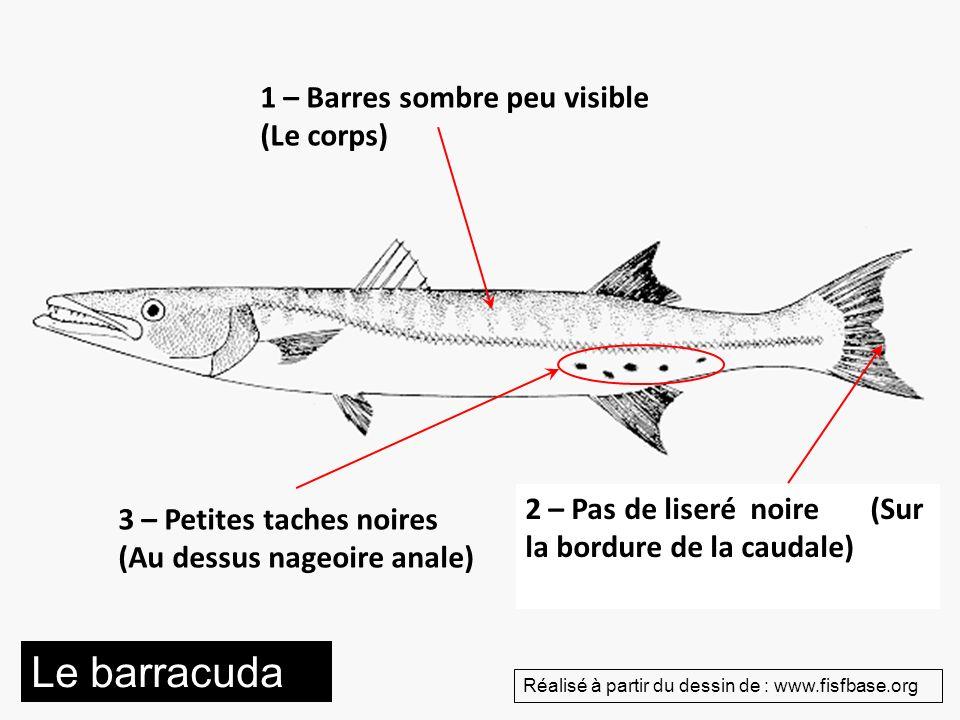 1 – Barres sombre peu visible (Le corps) 2 – Pas de liseré noire (Sur la bordure de la caudale) 3 – Petites taches noires (Au dessus nageoire anale) L