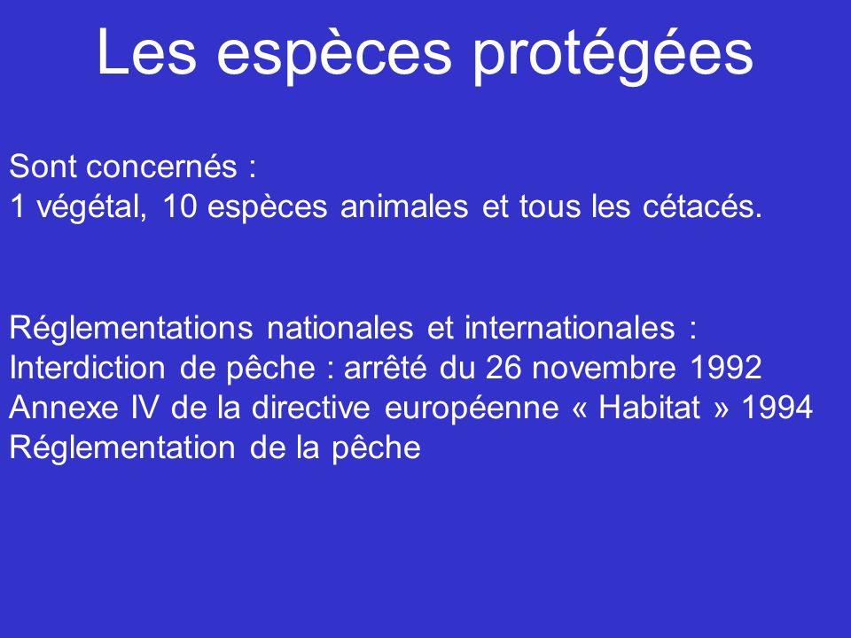Les espèces protégées Sont concernés : 1 végétal, 10 espèces animales et tous les cétacés. Réglementations nationales et internationales : Interdictio